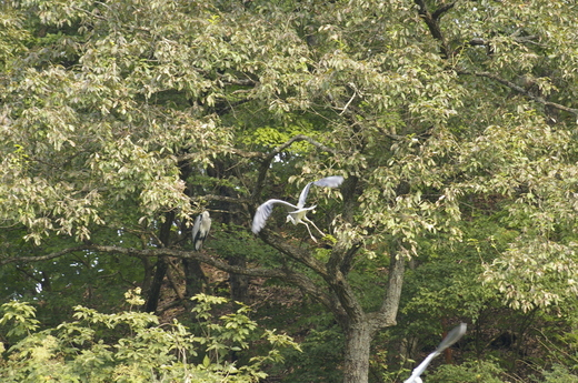2008-10-10 但馬海岸 164.JPG